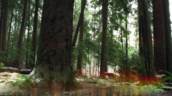 Pinocchio comes through the tree (The Stranger-s01e20)