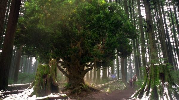 The last enchanted tree (The Stranger-s01e20)