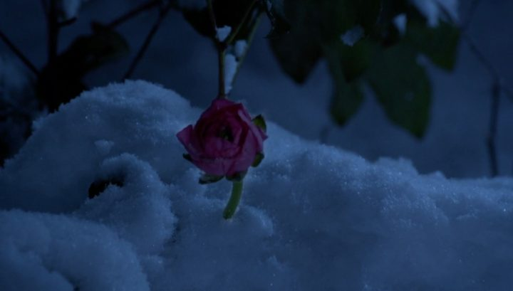 Once Upon a Time 6x17 Awake - Pixie flower in Storybrooke